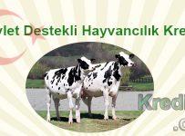 Devlet Destekli Hayvancılık Kredisi