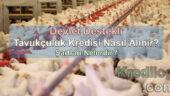 Devlet Destekli Tavukçuluk Kredisi Nasıl Alınır? Şartları Nelerdir?
