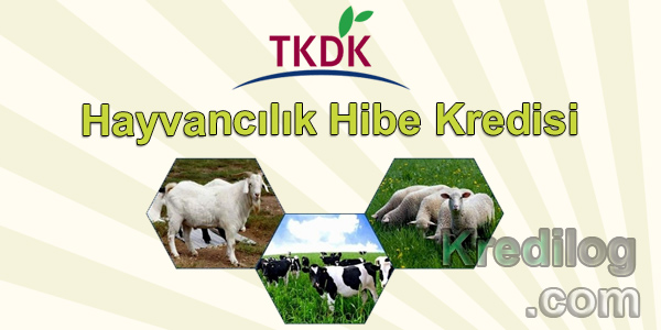 TKDK Hayvancılık Hibe Kredisi