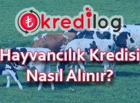 hayvancılık kredisi