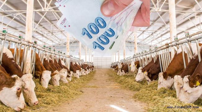 Hayvancılık Kredisi Nasıl Alınır? GÜNCEL