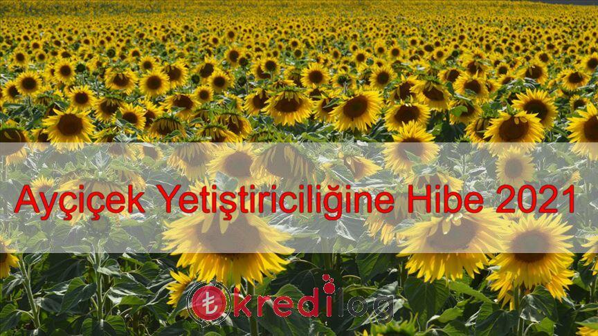 Ayçiçek Tohumuna Hibe Desteği 2021